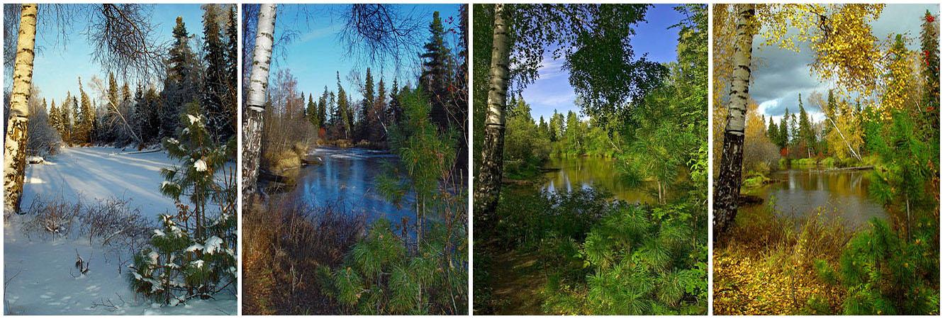Картинка одного пейзажа в разное время года
