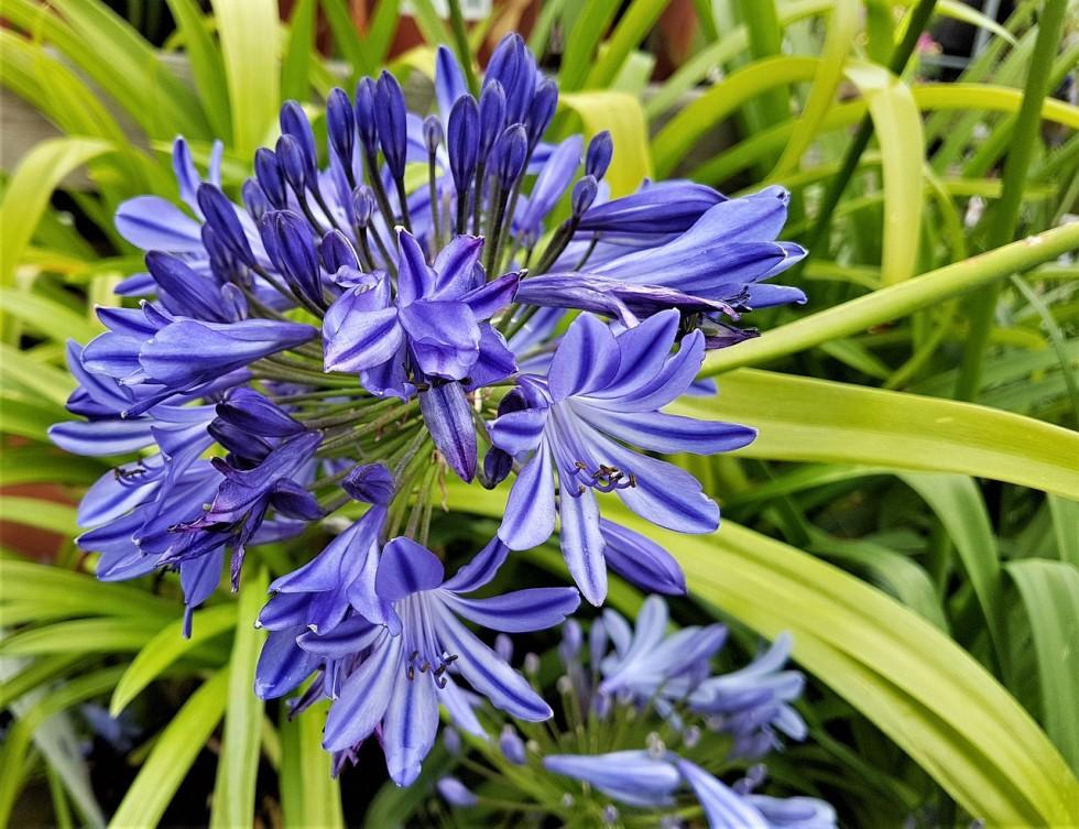 flower 3481408 1280