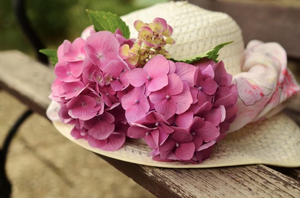 hat sun hat hydrangeas tender romance blossom bloom beautiful 1325194