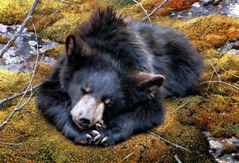 Carl Brenders. Bearly Asleep   Copy