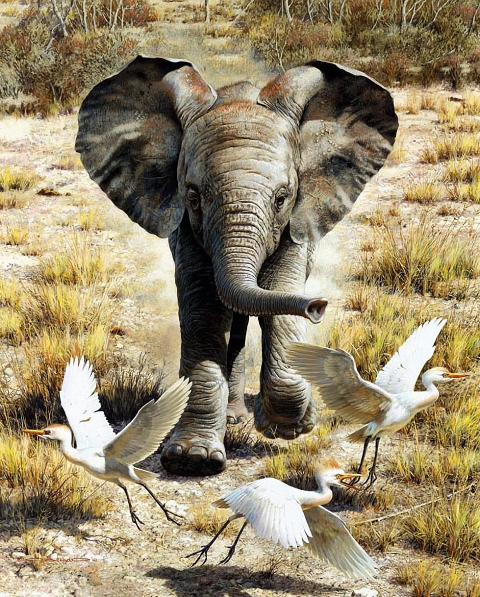 Carl BrendersFlushing Egrets Baby Elephant Giclee
