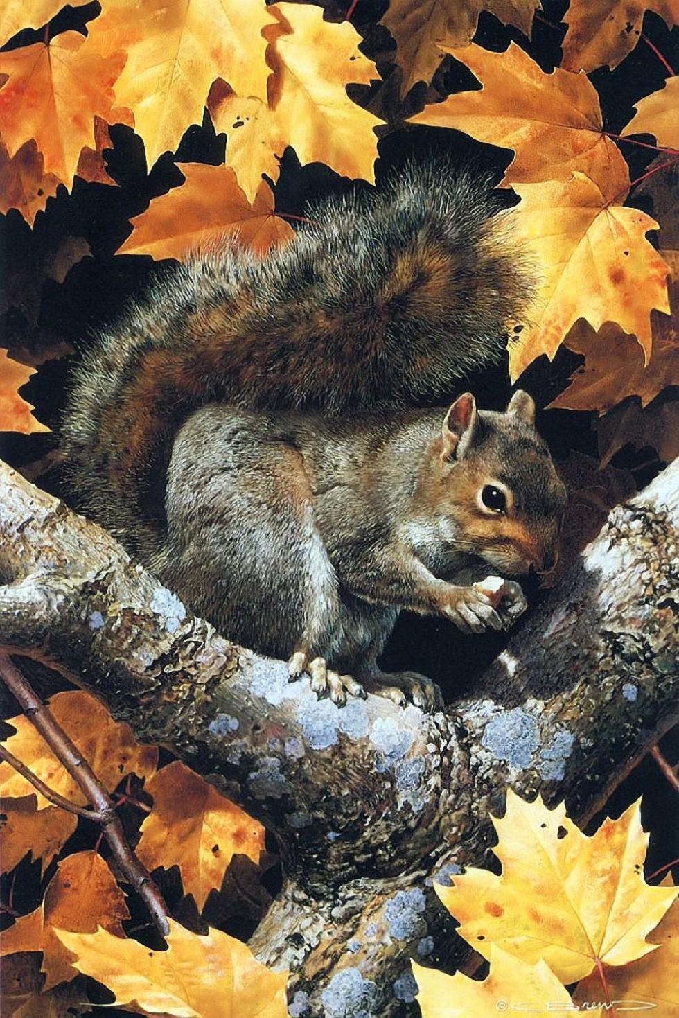 Carl Brenders.Golden Season Gray Squirrel 2 yapfiles.ru